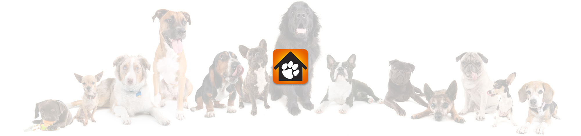 Kennels Header - Single Posts