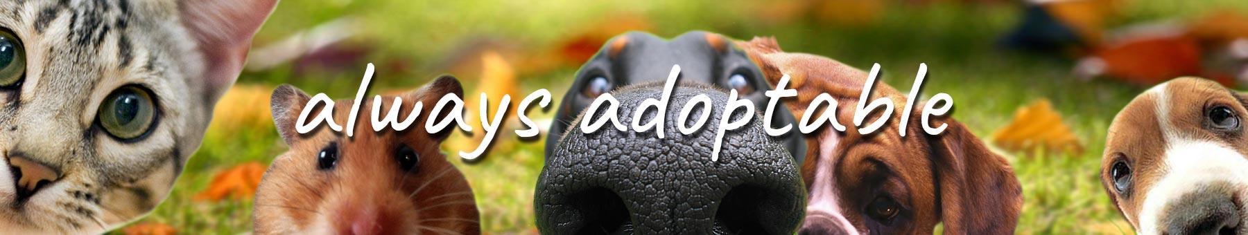 adoptable pets