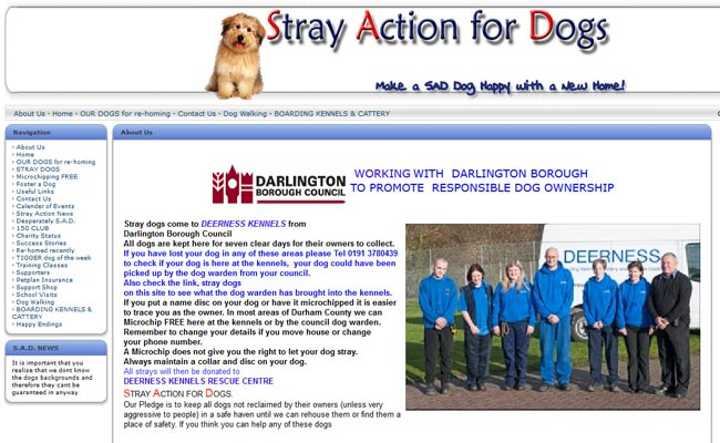 Stray Action