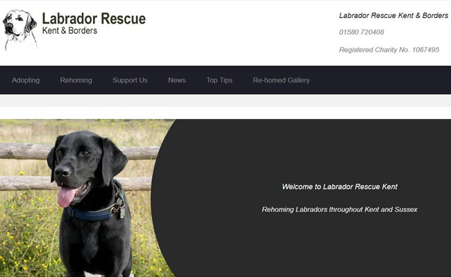Labrador Rescue Kent and Borders