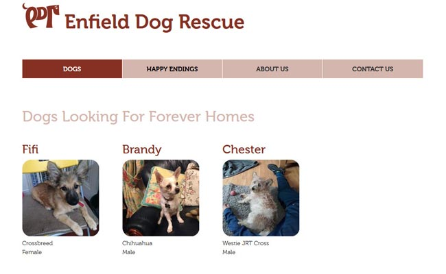 Enfield Dog Rescue