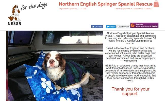 Northern English Springer Spaniel Rescue