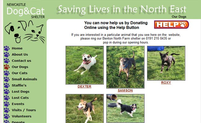 Benton Cat And Dog Shelter Newcastle Upon Tyne Website