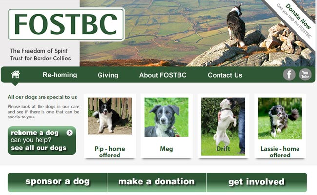 Freedom of Spirit Trust for Border Collies